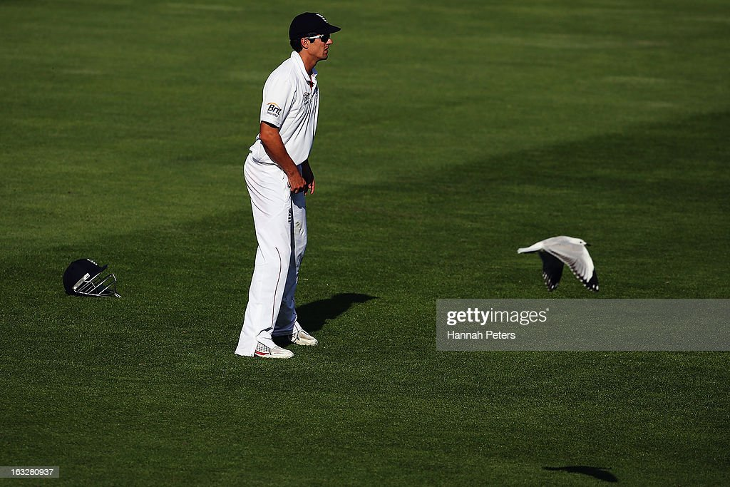A bird flies past Alastair Cook of England as he fields during day two of the First Test match between New Zealand and England at University Oval on March 7, 2013 in Dunedin, New Zealand.