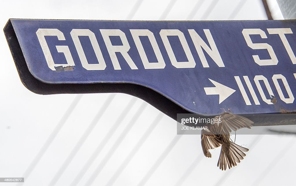A bird flies with dry grass to build a nest on a street sign opposite the main gate of Hollywood Forever Cemetery during the funeral of Mick Jagger's girlfriend LWren Scott in Hollywood, California on March 25, 2014. The model-turned-fashion designer was found hanged in her luxury New York apartment last week. She was 49. The cemetery was closed for the roughly one-hour service, held amid tight security.