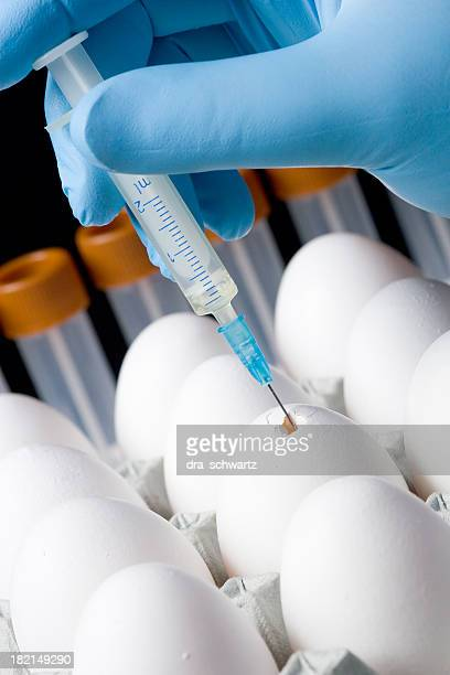 Bird flu  vaccine production