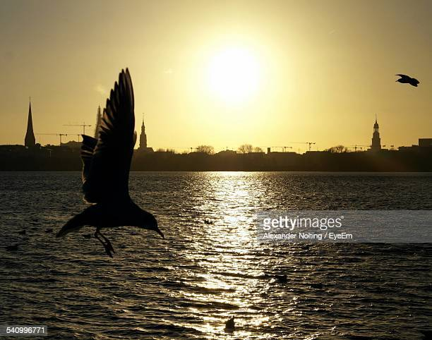 Bird Flying Above Sea During Sunset