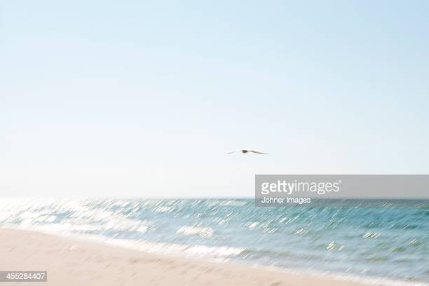 Bird flying above sea