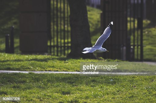 bird flying in a park : Stock Photo
