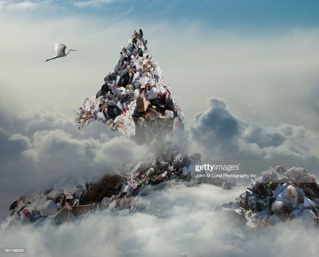Bird flying over landfill in clouds