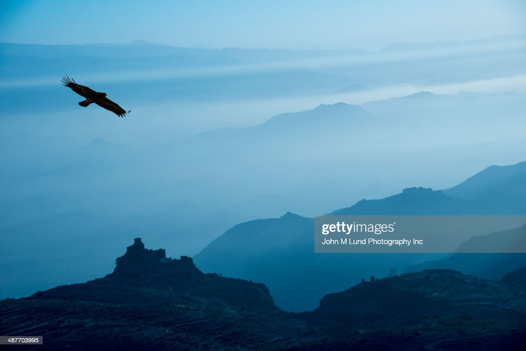 Bird flying over silhouetted mountains, Yemen