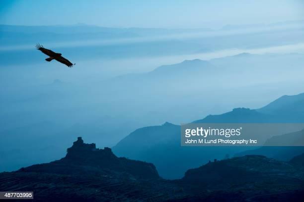 Bird flying over silhouetted mountains, Yemen