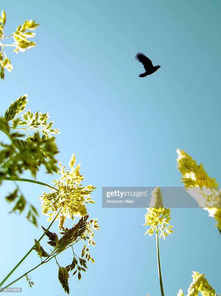 Bird flying : Stock Photo