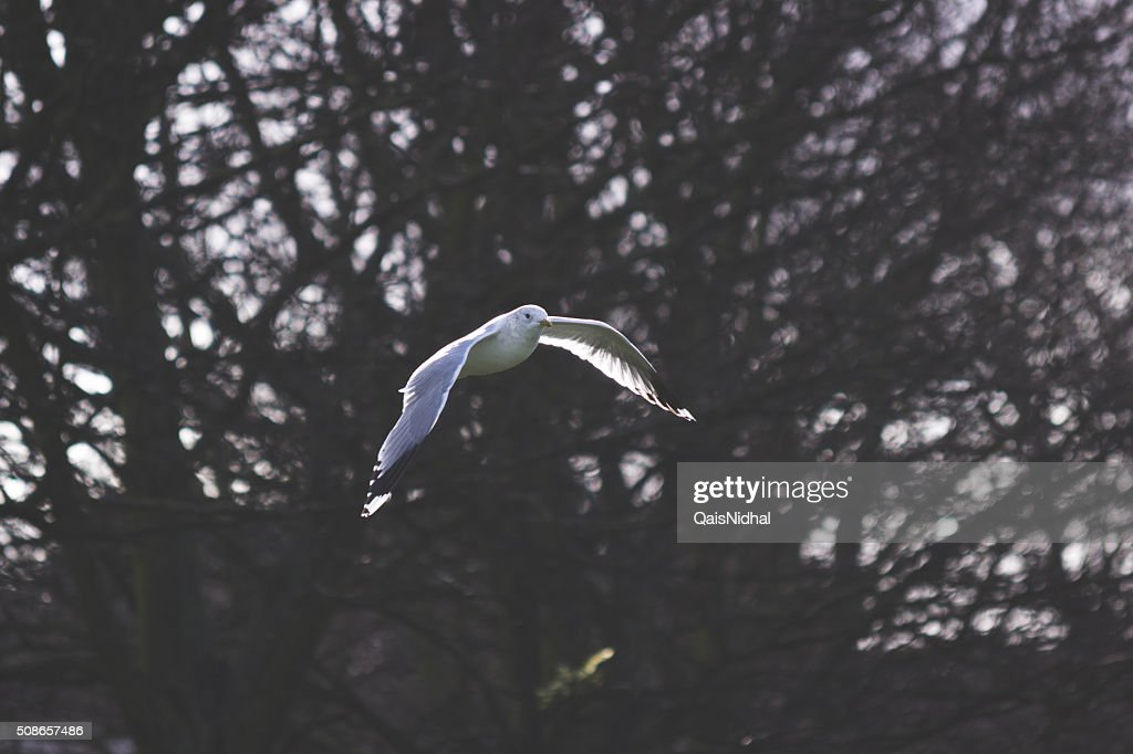 bird flying with tree background : Stock Photo