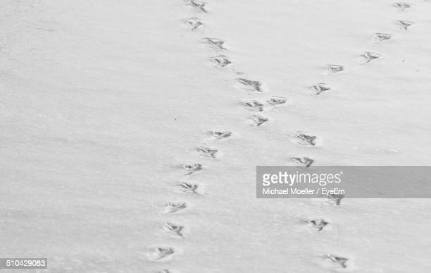 Bird footprints on sand at beach