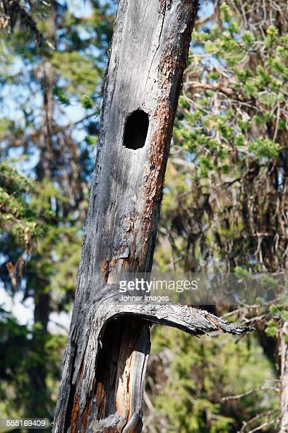 Bird hole in tree trunk