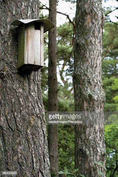 Bird house hanging on a tree trunk
