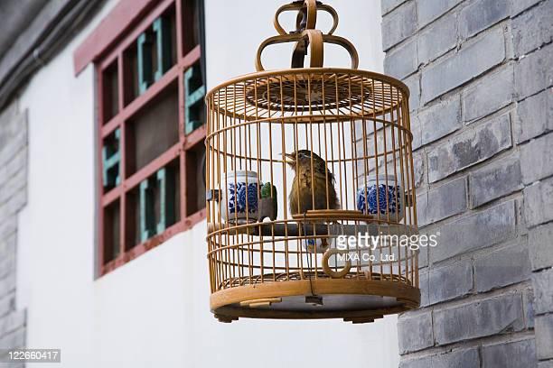 Bird in cage, Beijing, China