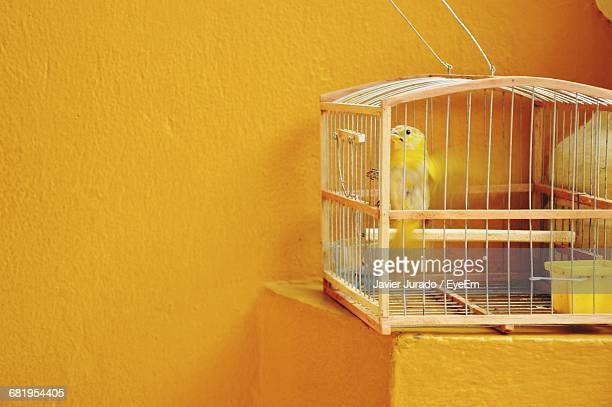 Bird In Cage By Yellow Wall