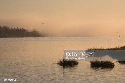 Bird in grassy island on lake : Stock Photo