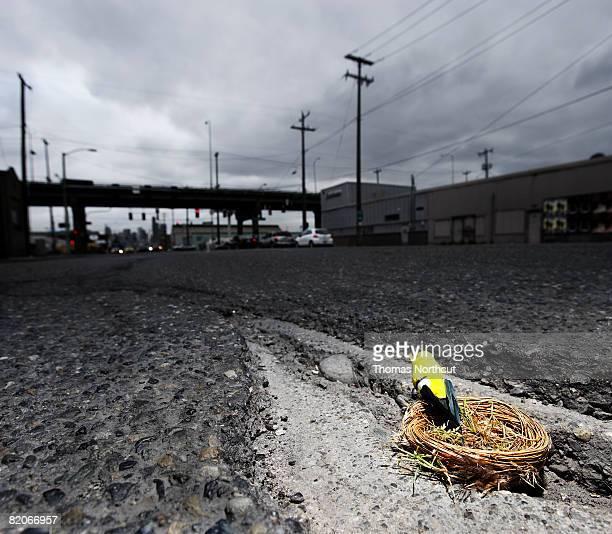 Nido de Pájaro en calle de la ciudad