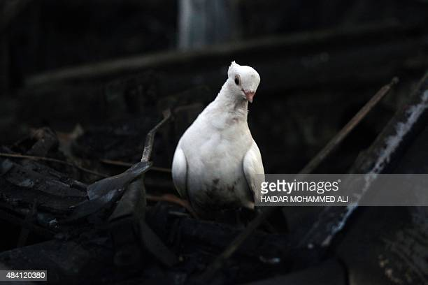 A bird is perched on the wreckage of a car following a car bombing at a vehicle market on August 15 2015 in Sadr City a northern Shiite district of...