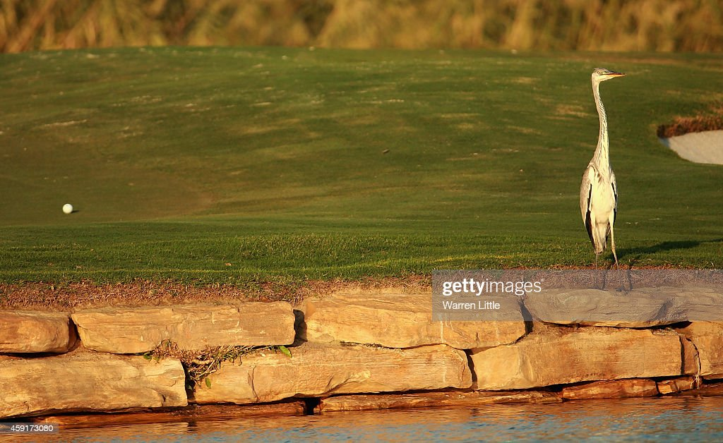 A bird is pictured on the 17th green ahead of the DP World Tour Championship at Jumeirah Golf Estates on November 18, 2014 in Dubai, United Arab Emirates.