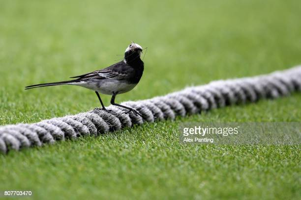 A bird is pictured on the boundry rope during day two of the Specsavers County Championship Division One match between Surrey and Hampshire at The...