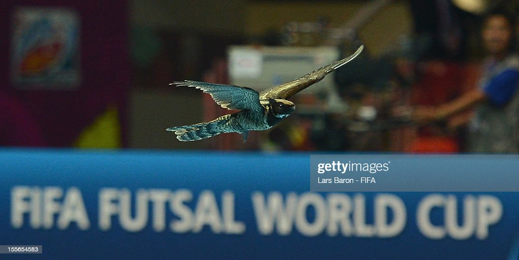 A bird is seen inside the arena during the FIFA Futsal World Cup Group E match between Egypt and Czech Republic at Indoor Stadium Huamark on November 6, 2012 in Bangkok, Thailand.