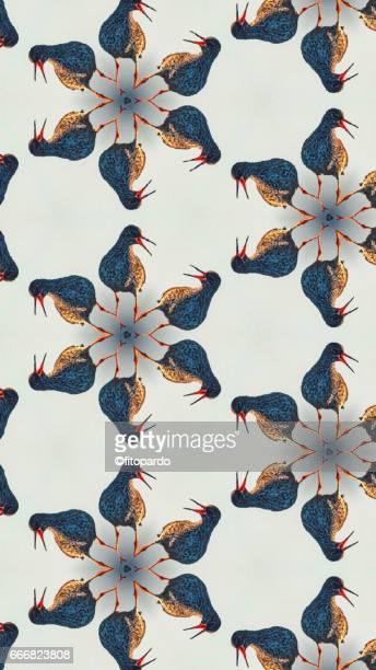 Bird kaleidoscope pattern