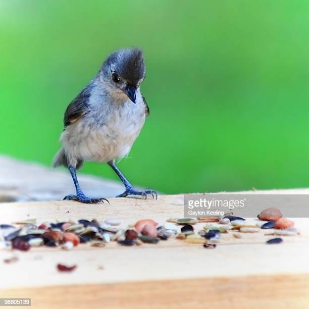 A bird looking at birdseed