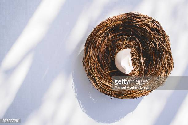 Bird Nest With Broken Eggshell