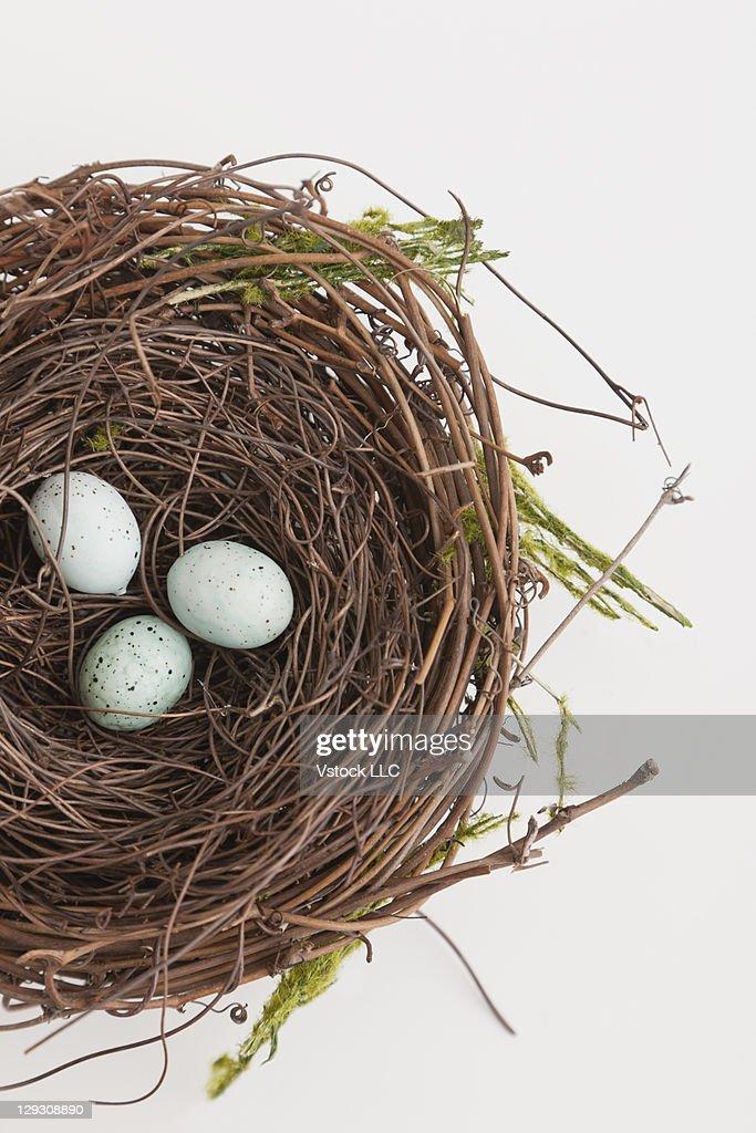 Bird nest with three eggs