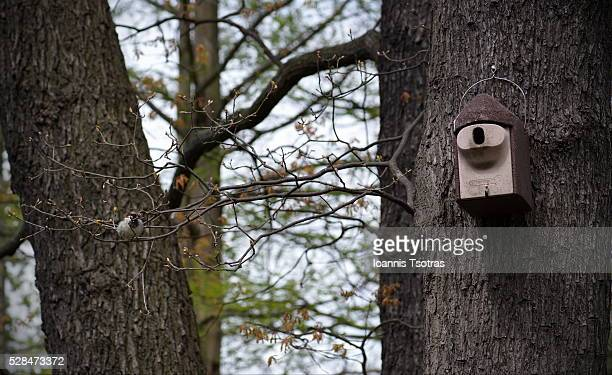 Bird next to a wooden birdhouse