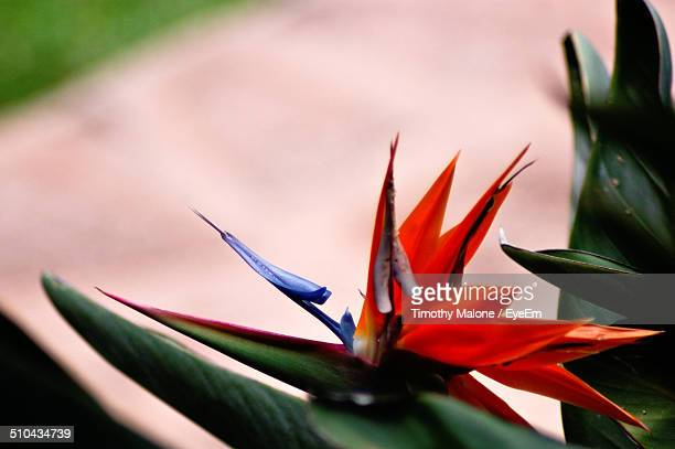 Bird of paradise against blurred background