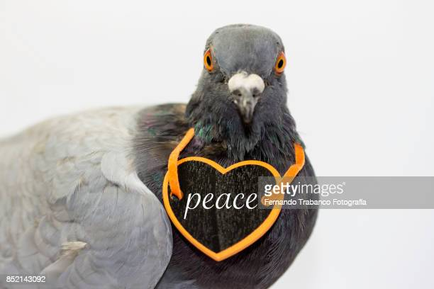 bird of peace