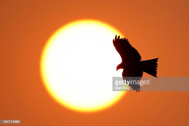 A bird of prey flies overhead at sunset at the Major Dhyan Chand National Stadium during day one of the Delhi 2010 Commonwealth Games on October 4...