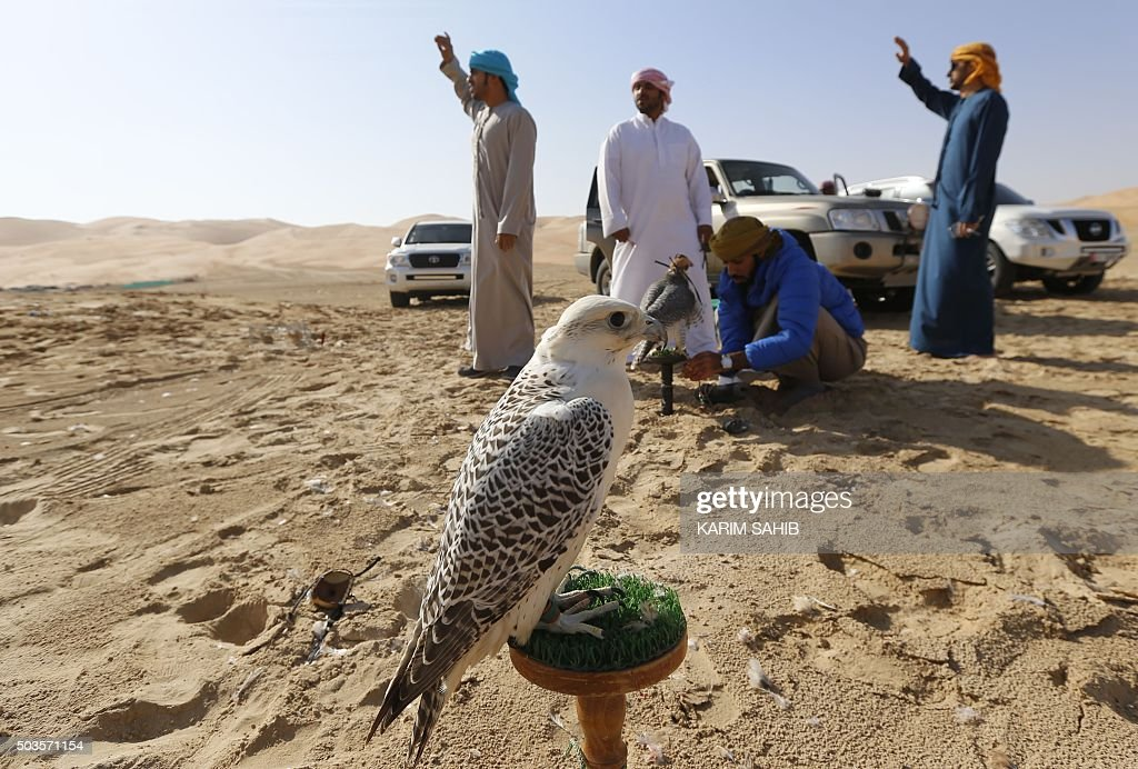 A bird of prey stands on a perch as Emiratis prepare themselves to train their birds on January 6, 2016, during the Liwa 2016 Moreeb Dune Festival in the Liwa desert, some 250 kilometres southwest of Abu Dhabi. The festival, which attracts participants from around the Gulf region, includes a variety of races (cars, bikes, falcons, camels and horses) or other activities aimed at promoting the country's folklore.