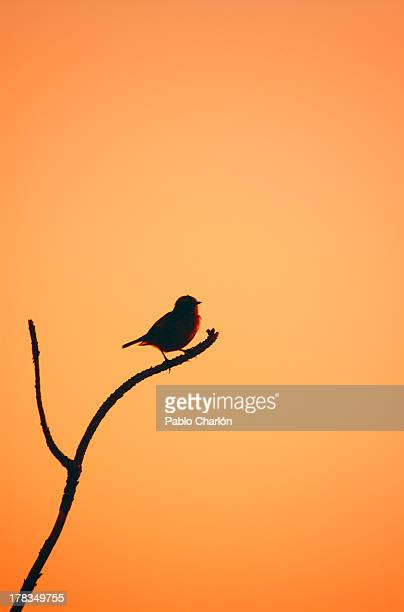 bird on a branch silhouette