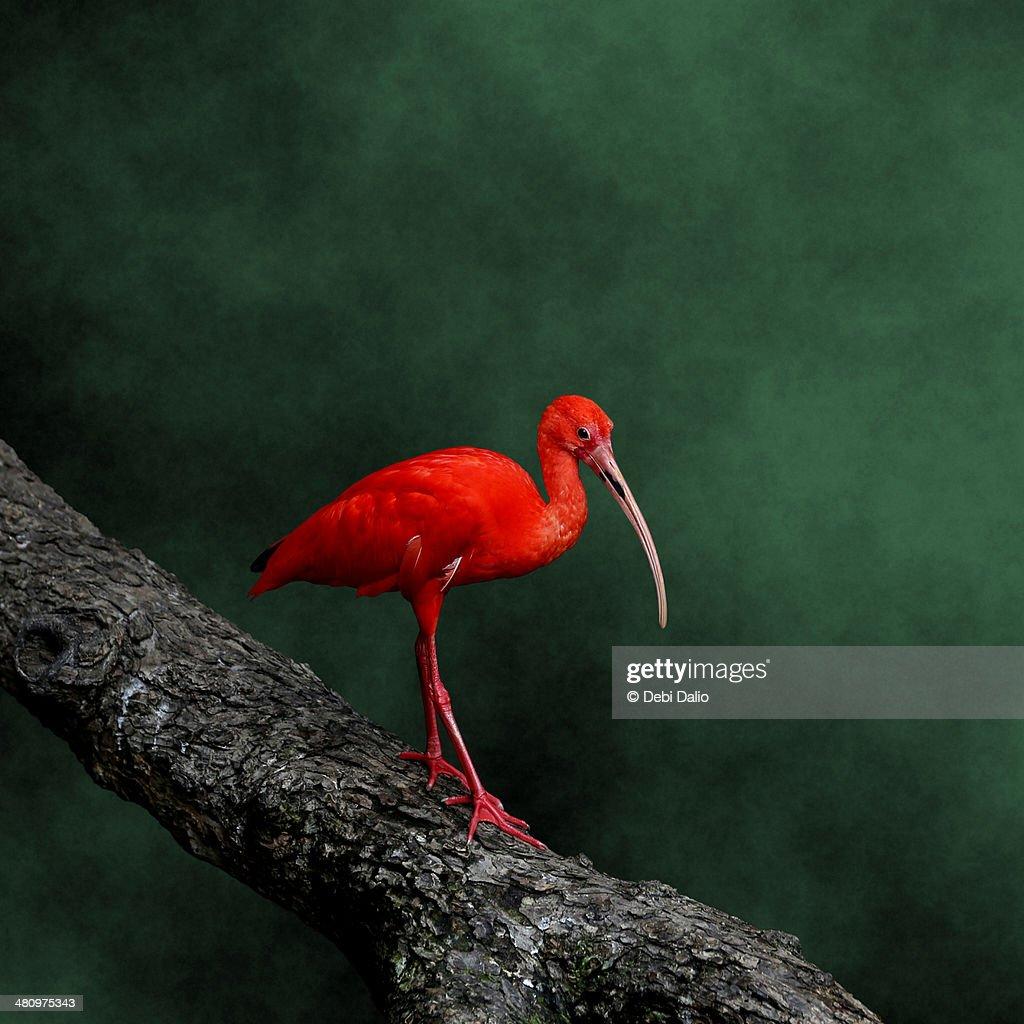 Bird on a Catwalk