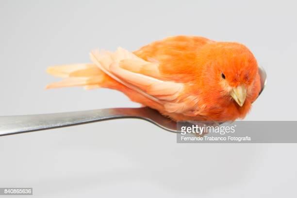 Bird on a spoon