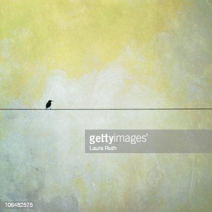 Bird on telephone wire