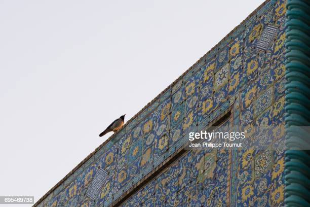 Bird on the facade of the Shah Mosque, Naghsh-e Jahan Square, Isfahan, Iran