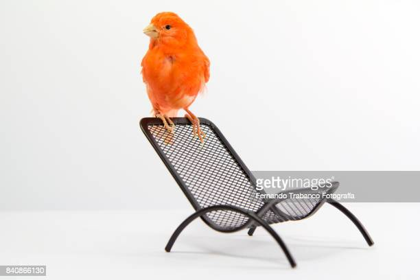 Bird perched on a chair