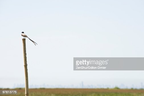 Bird perched on wooden post