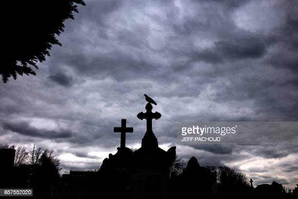 TOPSHOT A bird perches atop a grave at the Loyasse cemetery on March 21 2017 in Lyon At the Loyasse cemetery the city of Lyon has allowed nature to...