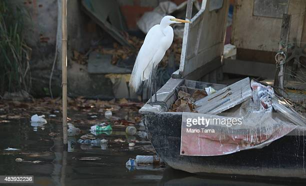 A bird perches on a boat along a fishermen's community on an inlet along the polluted Guanabara Bay the Rio 2016 Olympic Games sailing venue on...