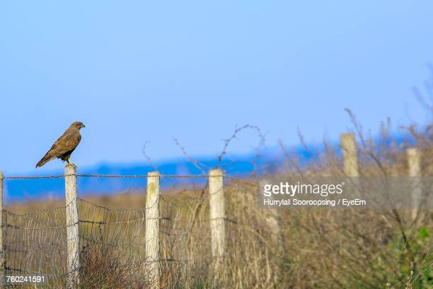 Bird Perching On Barbed Wire Against Sky