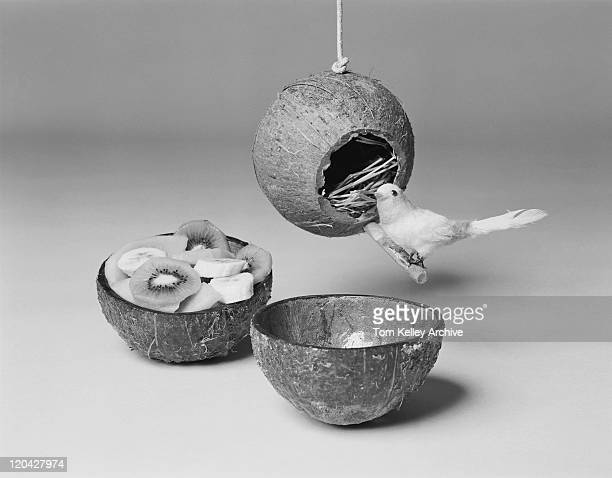 Bird perching on nest near fruit bowl of coconut shell, close-up