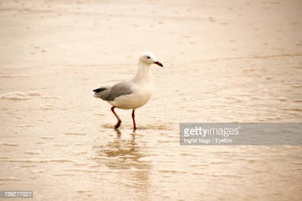 Bird Perching On Sand At Beach