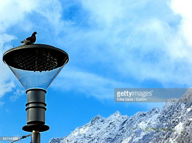 Bird Perching On Street Light