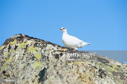 Bird perching on top of rock