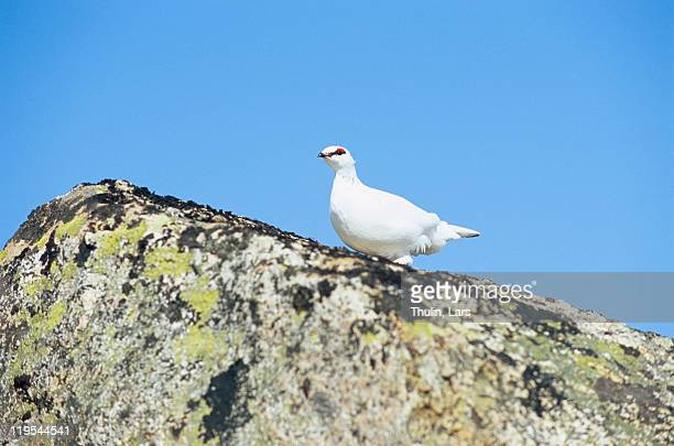 Bird perching on top of rock