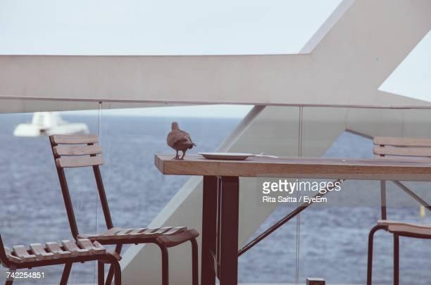 Bird Perching On Wooden Table Against Sea At Restaurant