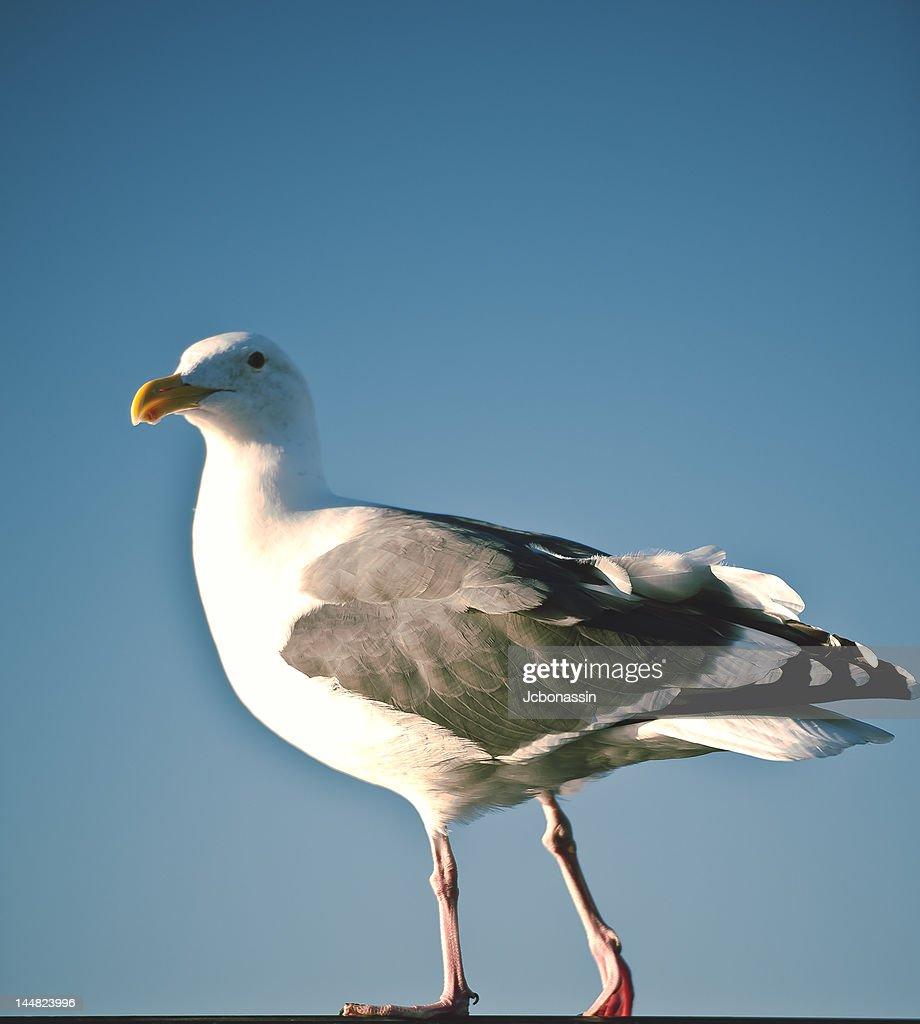 Bird perching : Stock Photo