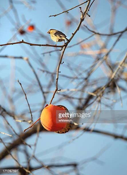 Bird & Permission