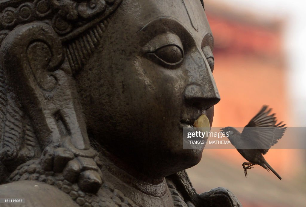 A bird picks food from the statue of the Hindu god Garuda at Basantapur Durbar square in Kathmandu on March 20, 2013. The Durbar Square holds the palaces of the Malla and Shah kings who ruled over the city, is located in the centre of the capital and is listed as a UNESCO world heritage site. AFP PHOTO/ Prakash MATHEMA